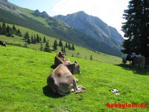 Wanderung_Zugspitze_IMG_5552