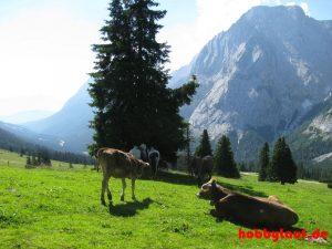 Wanderung_Zugspitze_IMG_5553