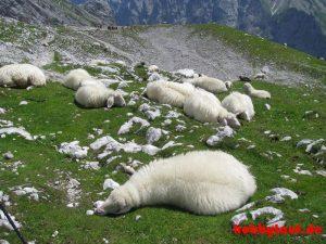 Wanderung_Zugspitze_IMG_5598