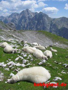 Wanderung_Zugspitze_IMG_5599